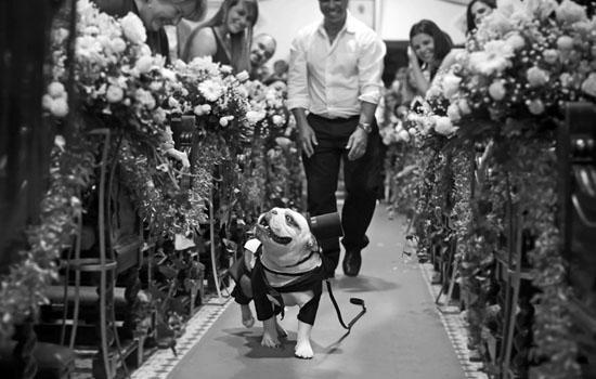 pet on weddings