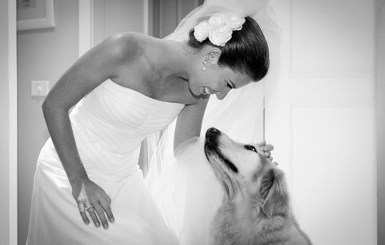 pet on weddings2